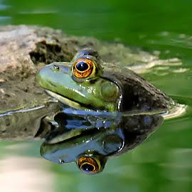 by Shawn Thomas - Animals Amphibians