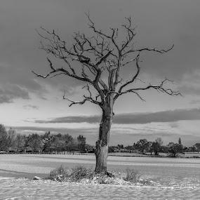 Tree! by Nigel Bishton - Black & White Landscapes