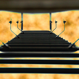 climbing for gold by Jo Moreau - Digital Art Things