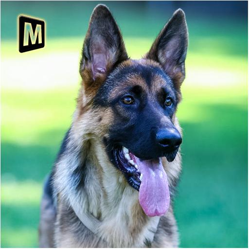 Real Dog Shephard World SIM (game)