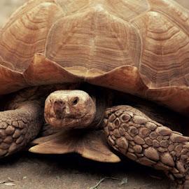 by Sean Haley - Animals Reptiles