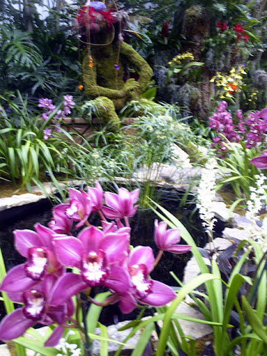 orchid show 2011 mayan