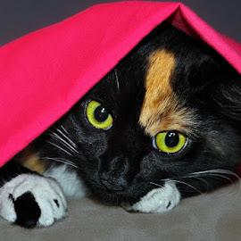 Playful Kitty P. 2 by B Lynn - Animals - Cats Playing ( pinks., mammals., kitties., mammal., sheet. )