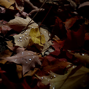 Tears of fall by Vita Perelchtein - Novices Only Landscapes ( wild, explore, canada, drop, green, forest, ontario, yellow, leaf, leaves, woods, tears, red, nature, autumn, droplet, fall, hike, rain )