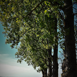beach and trees by Lavonne Ripley - Nature Up Close Trees & Bushes