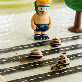 Snail race by Wilma Michel - Artistic Objects Toys