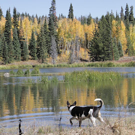 Do you see what I see by Joel de Blonk - Animals - Dogs Portraits ( reflection, nature, fall colors, lake )