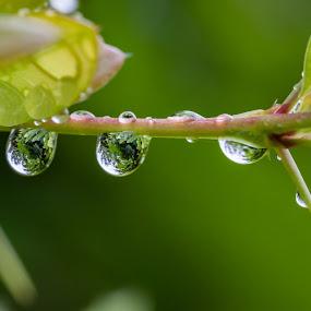 by Thomas Berwein - Nature Up Close Natural Waterdrops