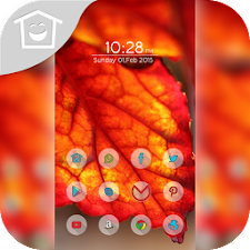 Beautiful red leaves theme