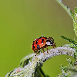 & by Tarasij Zirob - Animals Insects & Spiders ( zirob, korosten )