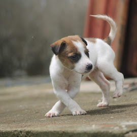 dancing by Vivek Chethan Muliya - Animals - Dogs Puppies ( dancing, dogs, animals, puppies, cute )