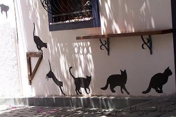 Kaş Sokaklarından