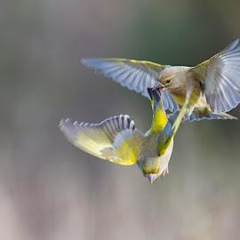 Get away! by Denis Keith - Animals Birds