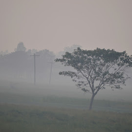 Tree by A A Muhai Menul - Landscapes Weather