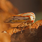 Oak Tree Hopper