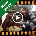 Funny Videos – Hot Videos 2017
