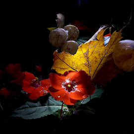 *** by Jurijs Ratanins - Instagram & Mobile Android ( mobilography, nature, autumn, plants, leaves, flowers )
