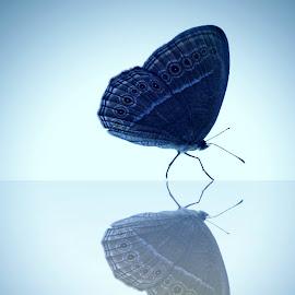 bercermin by Qoqo Zuhair - Instagram & Mobile Android ( kupu-kupu, biru, sayap, cantik, sendiri, bayangan )