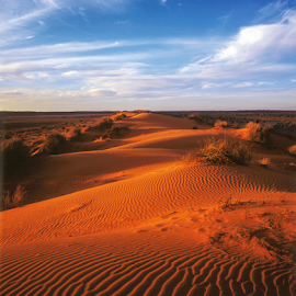 Big Red dune, Queensland by Annette Flottwell - Landscapes Deserts ( simpson desert, sand, 4x5, dunes, sunset, qld, birdsville, desert )