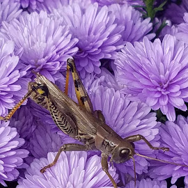 Fall intruder by Malini Rao - Animals Insects & Spiders