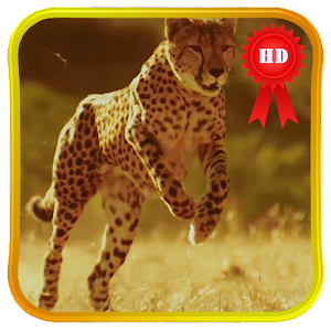 Slowmo Running Cheetah LWP
