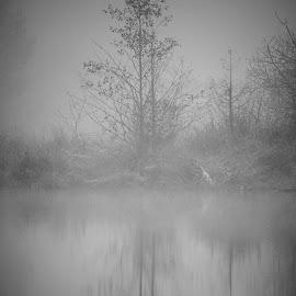 Tree  by Todd Reynolds - Black & White Flowers & Plants