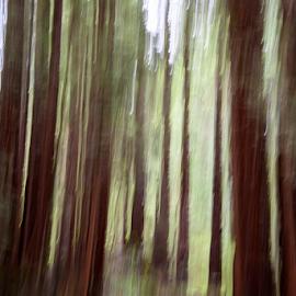 Nisene Marks One-2 by Matt Folsom - Abstract Light Painting ( redwoods, nisene marks, hike )