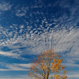 When sky is so hight by Irena Gedgaudiene - Landscapes Weather ( clouds, sky, fall, colours, maple )