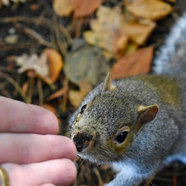 Squirrel  by Andy Mansell - Animals Other ( hand, curious, touch, squirrel )