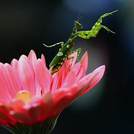 by Ajar Setiadi - Animals Insects & Spiders