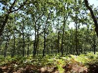 Los alrededores de Lagunilla se caracterizan por grandes extensiones pobladas de helechos