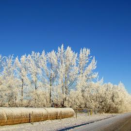 Frosty Winter Scene  by Linda Doerr - Uncategorized All Uncategorized ( blue sky, winter, snow, trees, road, landscape, frosty )