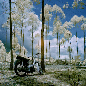 LOST by Alit  Apriyana - Transportation Motorcycles ( bali )