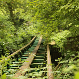 The old track by Chris Appleby - City,  Street & Park  Amusement Parks ( overgrown, track, theme park, forest )
