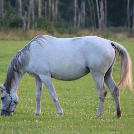 by Liina Kütt - Animals Horses