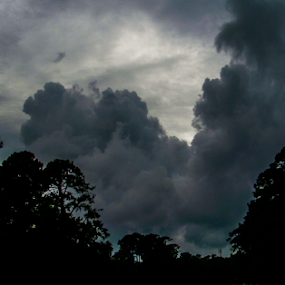 storm clouds by Edward Gold - Landscapes Cloud Formations ( tree tops, storm cloudes, clouds light with light, dark effect, dark storm cloudes )