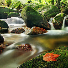 201210260939 Water Flow by Steven De Siow - Landscapes Waterscapes ( water, nature, fall, forest, leaf,  )