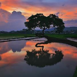 sunset at pohon pengantin salatiga by Gus Tedjo - Landscapes Sunsets & Sunrises ( nature, sunset, beautiful, landscape, natural )