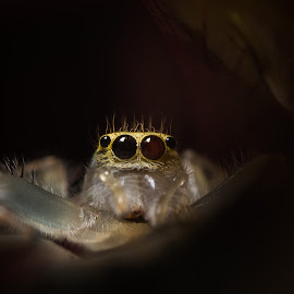 Telamonia sp. ( Light and Shadow ) by Asrarul Islam - Novices Only Macro ( macro, jumping spider, 50mm, spider, reverse macro )