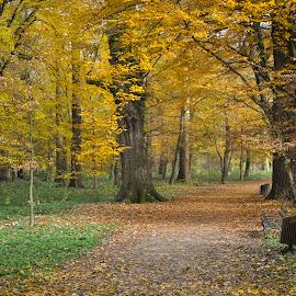 Autumn in Maksimir forest by Gordana Trošić-Kliska - City,  Street & Park  City Parks ( nature, park, autumn, colors, forest, zagreb, landscape )