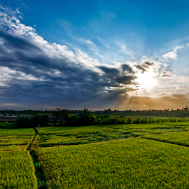Sunset with green rice fields by JJ Haruki - Landscapes Sunsets & Sunrises ( plant, oriental, lawn, land, landscape, plantation, crop, close, asian, farm, nature, indonesia, idyllic, asia, industry, balinese, bali, flora, grass, paddy, green, backgrounds, agriculture, horizon, cereal, field, organic, environment, blue, sunset, food, harvesting, outdoors, cultivate, meadow, cloud, natural, culture )