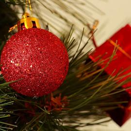 by Aleksandar Zhivkov - Public Holidays Christmas