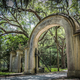 Southern Charm by Mark Halliday - City,  Street & Park  Historic Districts ( wormsloe, southern, arch, oak, south, architecture, spanish moss, gate,  )