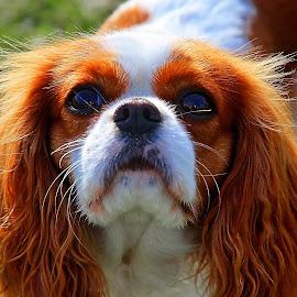 I want cookie :P by Bernarda Bizjak - Animals - Dogs Portraits