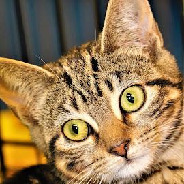 Sweet Kitten by Linda    L Tatler - Animals - Cats Portraits ( kitten, feline, cat, female, pet,  )