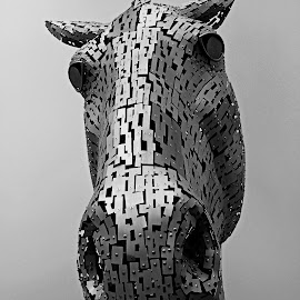 Horse, horse by Wilson Beckett - Buildings & Architecture Statues & Monuments (  )