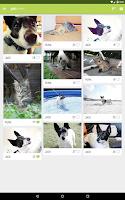 Screenshot of Peterest - Pet Image Gallery