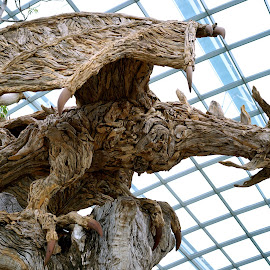 Wood Dragon by Mick Wells - Artistic Objects Other Objects ( sculpture, tree, wood, wings, art, dragon, gardens, dome, head, claws,  )