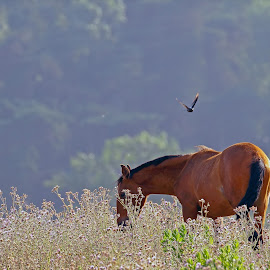 by Kishu Keshu - Animals Horses