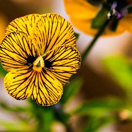by Luz UK - Flowers Single Flower
